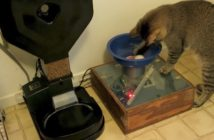 cat dropping ball into a contraption next to a large automatic cat feeder