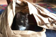 cat hiding inside a swirl of brown paper