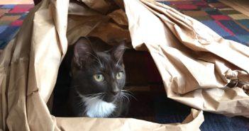 cat hiding inside a swirl of brown paper
